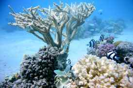 corals-marine-sea-water-reef-coral-diving-blue-nature